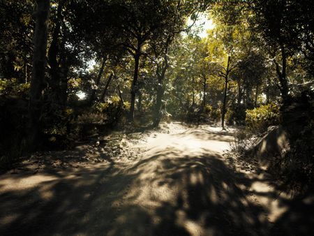 Unreal Engine 4 - Forest Scene