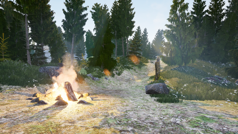 Campfire in a Forest