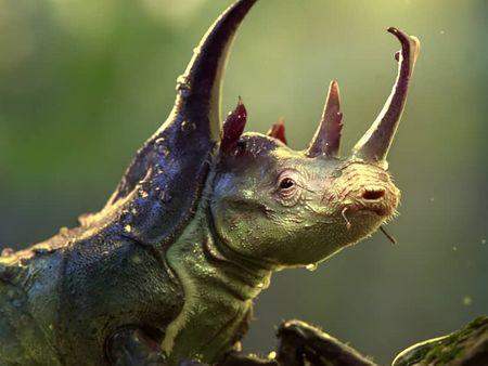 The rhinobeetle