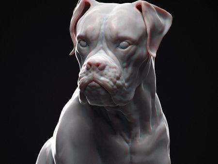 Tara the dog