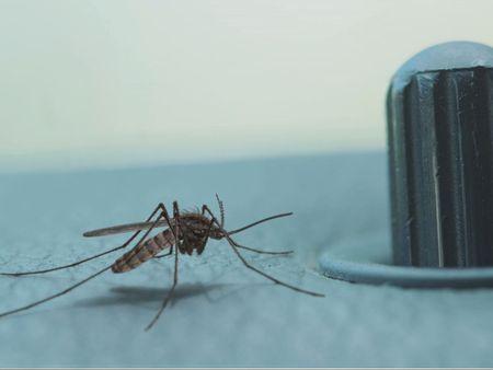 Mosquito escape!
