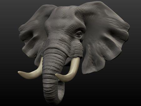 Elephant head sketch