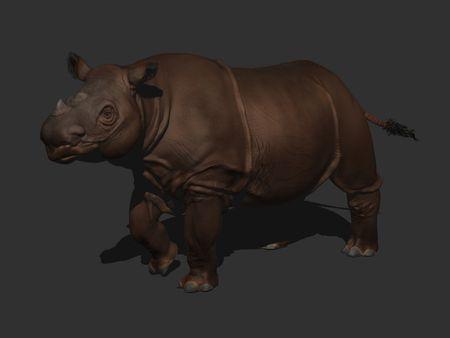 IMS 215 Sumatran Rhino