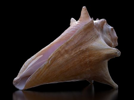 Conch Shell Photogrammetry