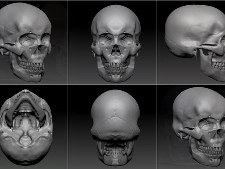 Skull Anatomical Study