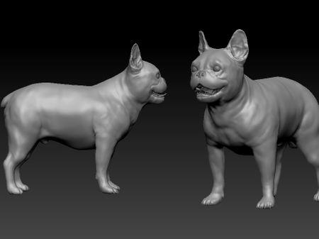 Dr Zarkov - Smartest French bulldog in the Mongo system