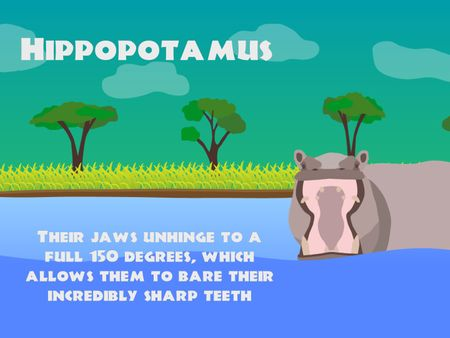 Animal Facts - An Animated Infographic