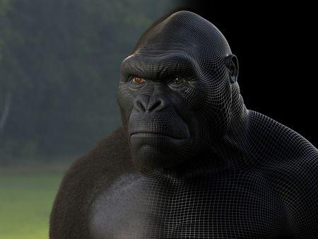 Young Kong
