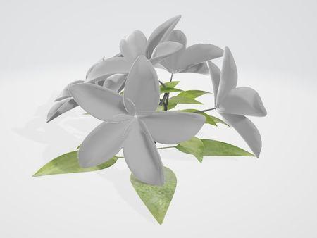 Poppy Flower 3D Model