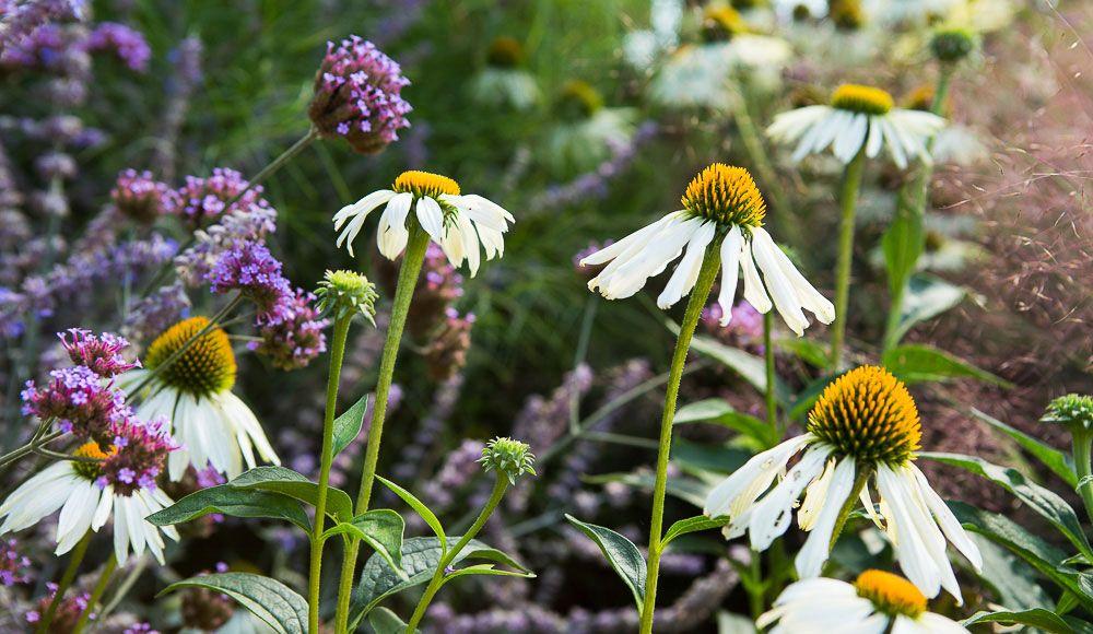 Summer Flower Garden 01 A1ice