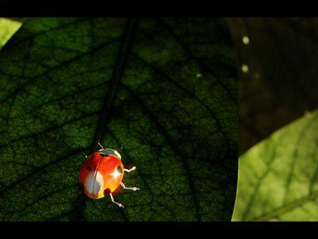 Weekly Drills 027 -  InsectWorld - Ladybug