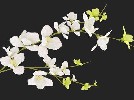 Flower Modelling