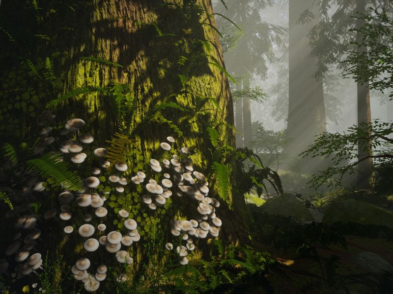 Redwood Forest - When the Morning Light Shines