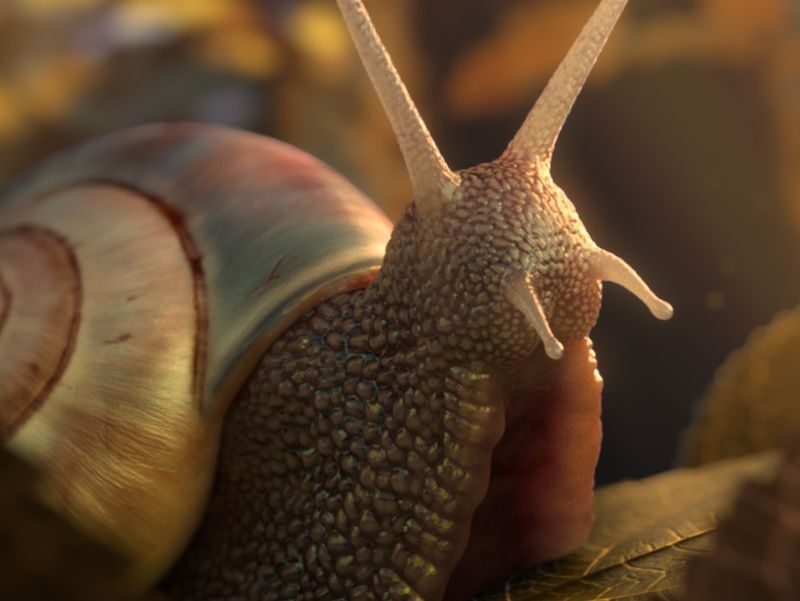 Just a snail moment.
