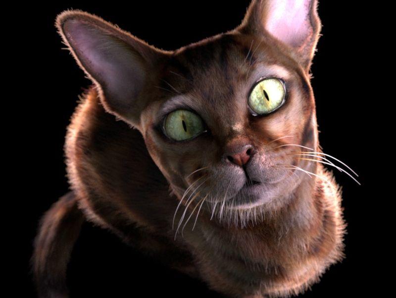 Miaou ?