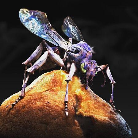 Turkey Tail wasp