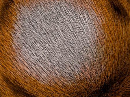 Poly Sphere Tiger Fur Groom