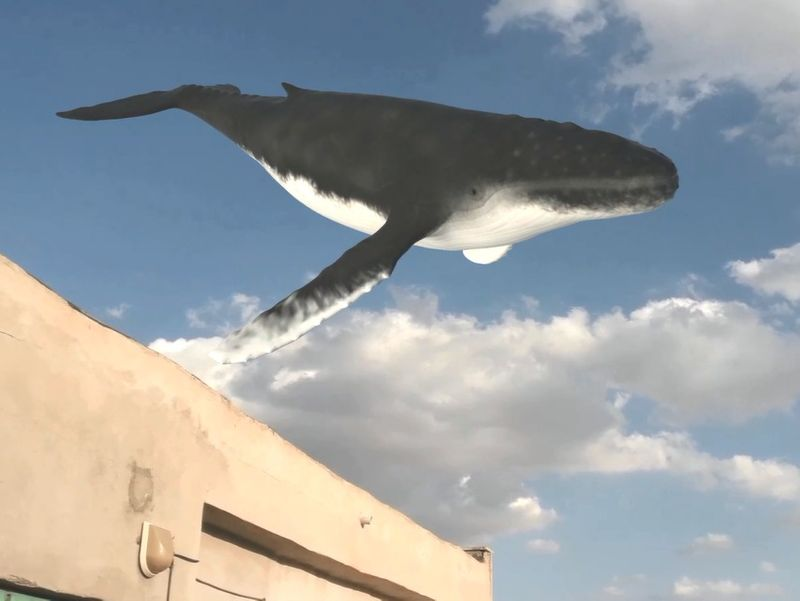 Whale in sky