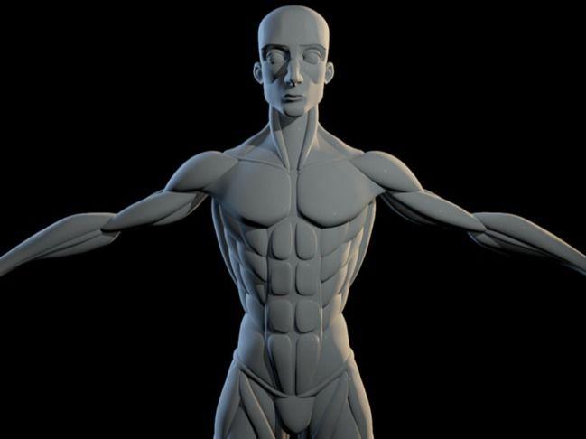 Interactive Stylised Anatomy Basemesh Blockout