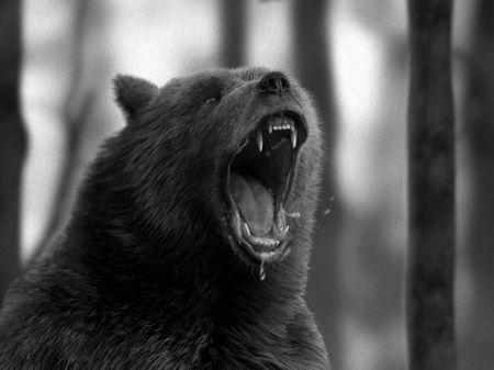 Alaska the Kodiak Bear