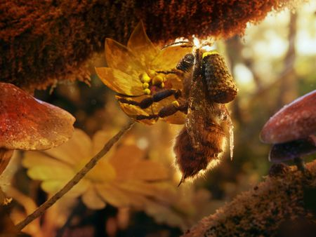 Foraging Honey Bee | Environment