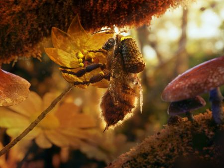 A Foraging Honey Bee - Animation