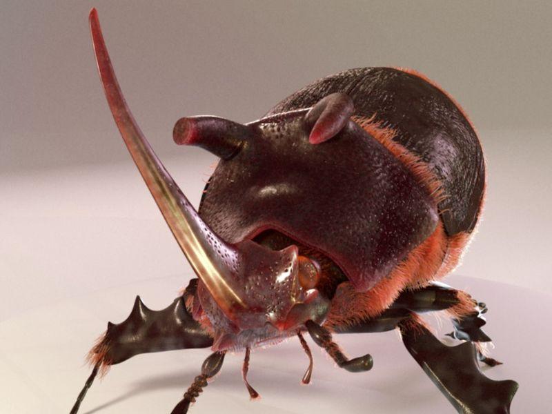 Basile the rhino-beetle