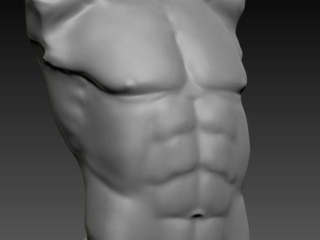 Male Anatomical Base
