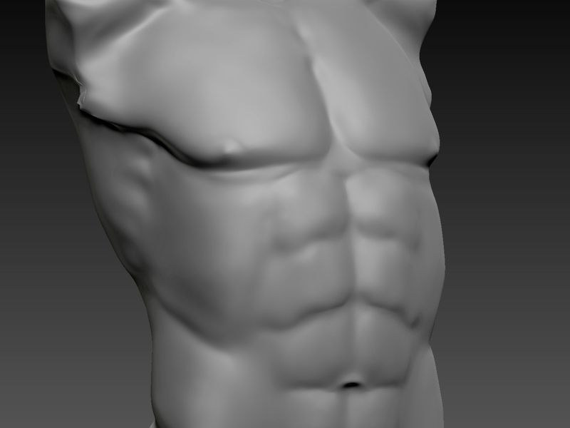 Male Anatomical Base