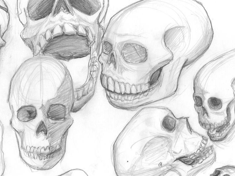 Weekly Drills - Human Skulls