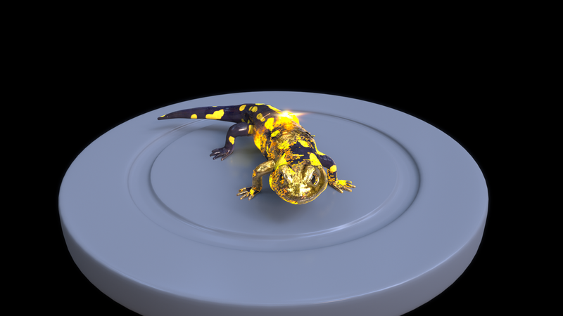 Salamander turn into gold