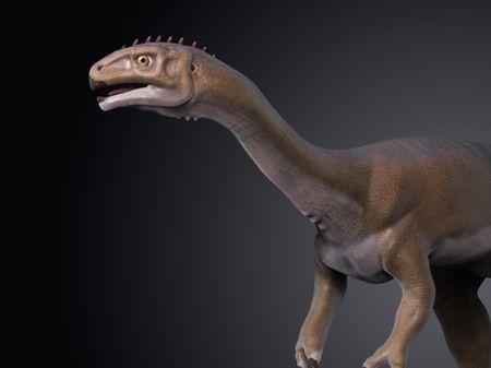 Chilesaurus!