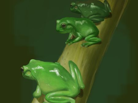 Frog Study Illustration