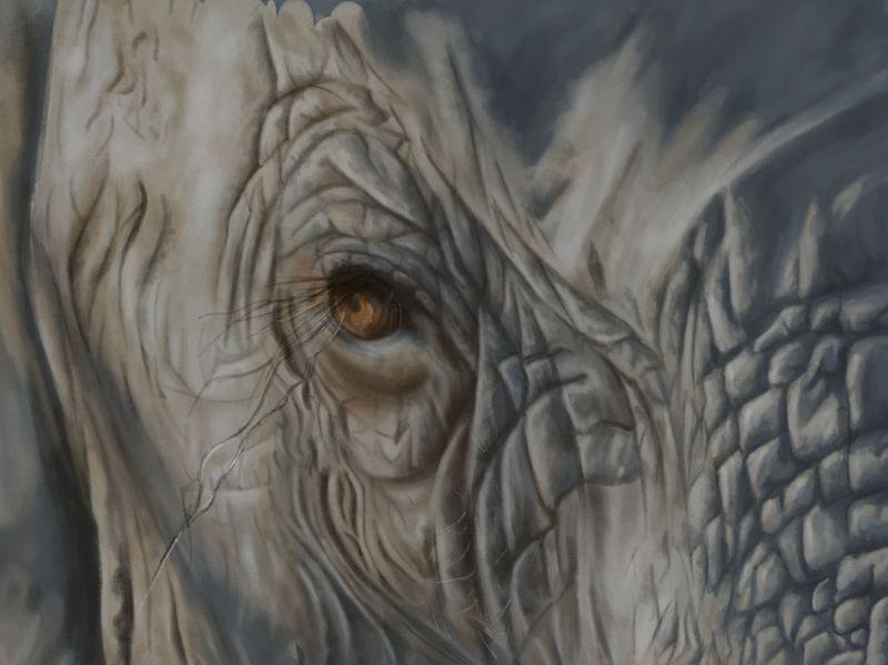 Elephant Texture Study