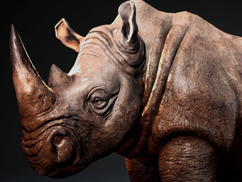 Rhinoceros (Realtime Animal)