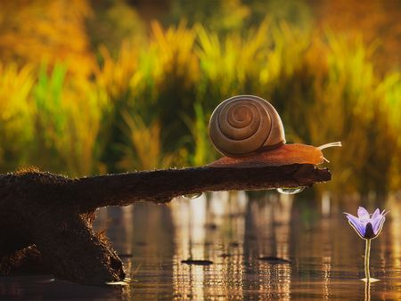 Snail, JackDaniels, Plane - Demo Reel