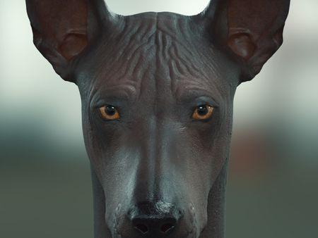 2 Creature Assets for VFX ♥