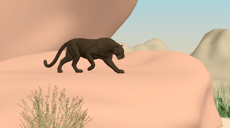 Panther Animation - iAnimate