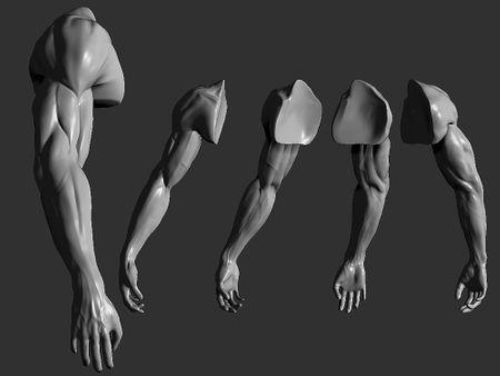 Study Arm - Zbrush