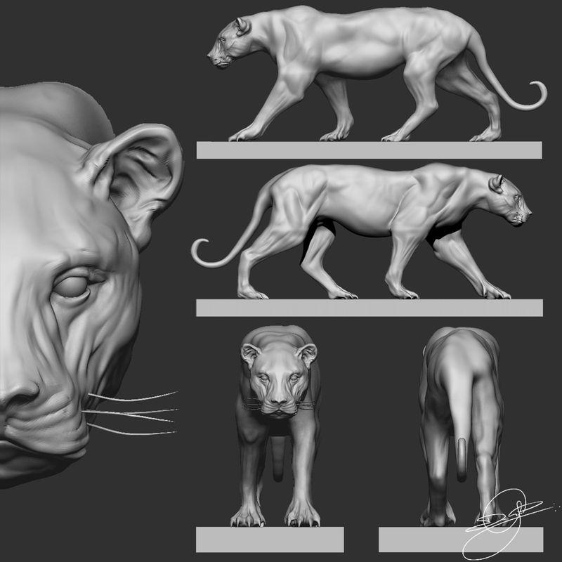 Study Puma - ZBrush