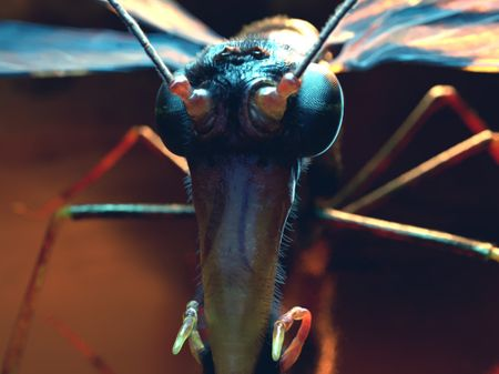 The Scorpion Fly