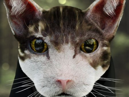 Ceku The Cat