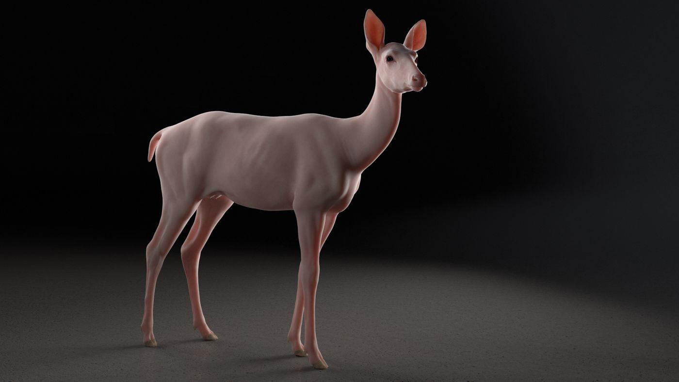 Deer Animation Still Skin  Elenadistefano.0130