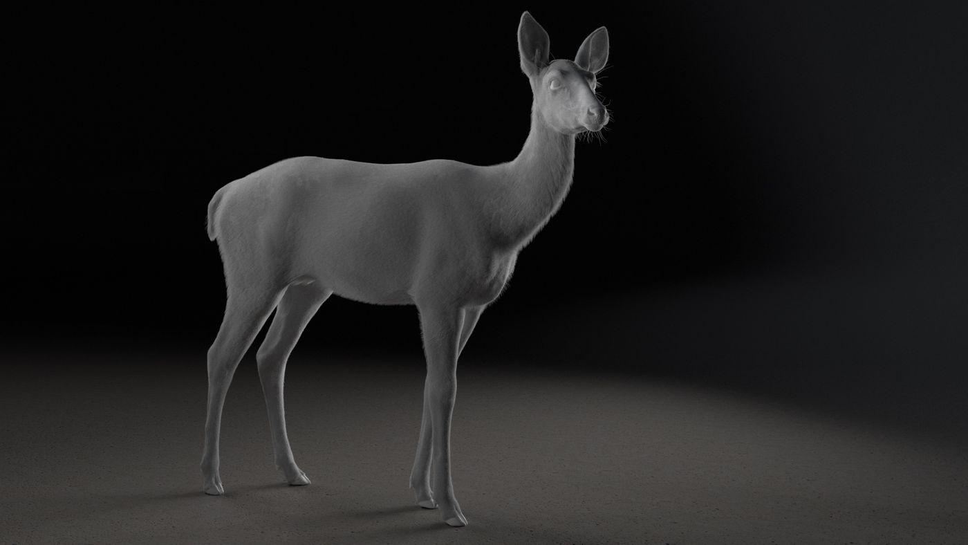 Deer Animation Greygroom  Elenadistefano.0130
