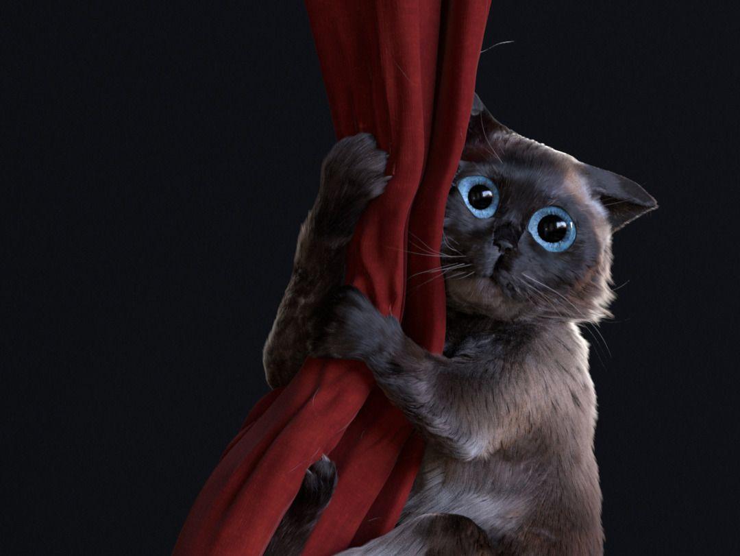 Pleading cat