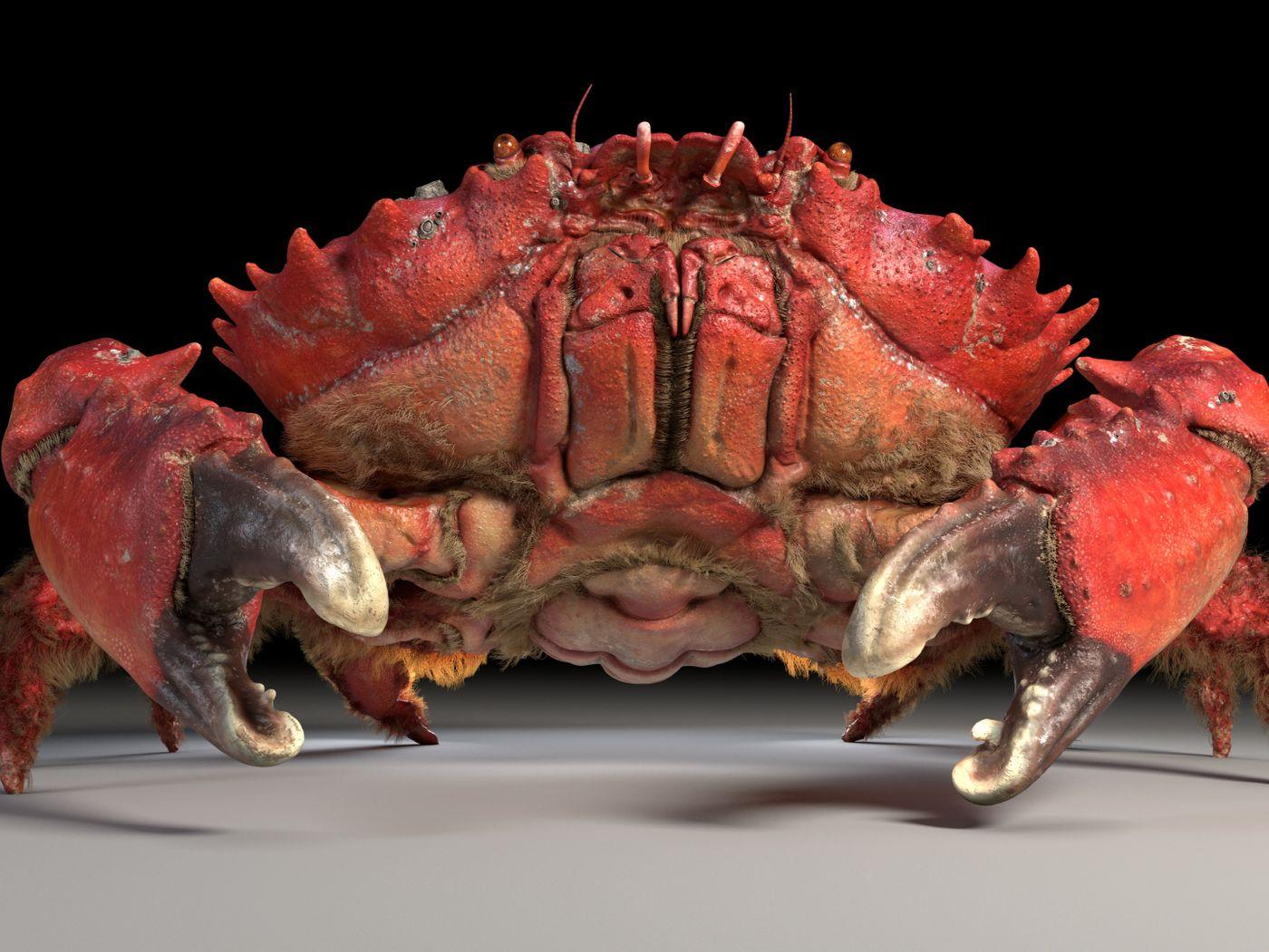 Spiny Spooner Crab
