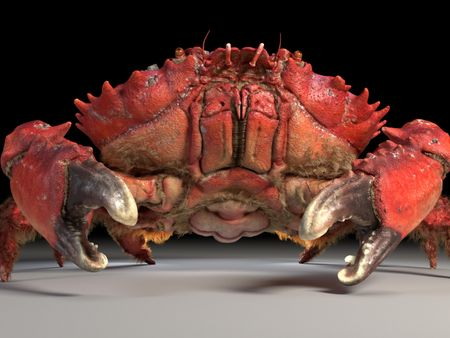 Spiny Spooner Crab