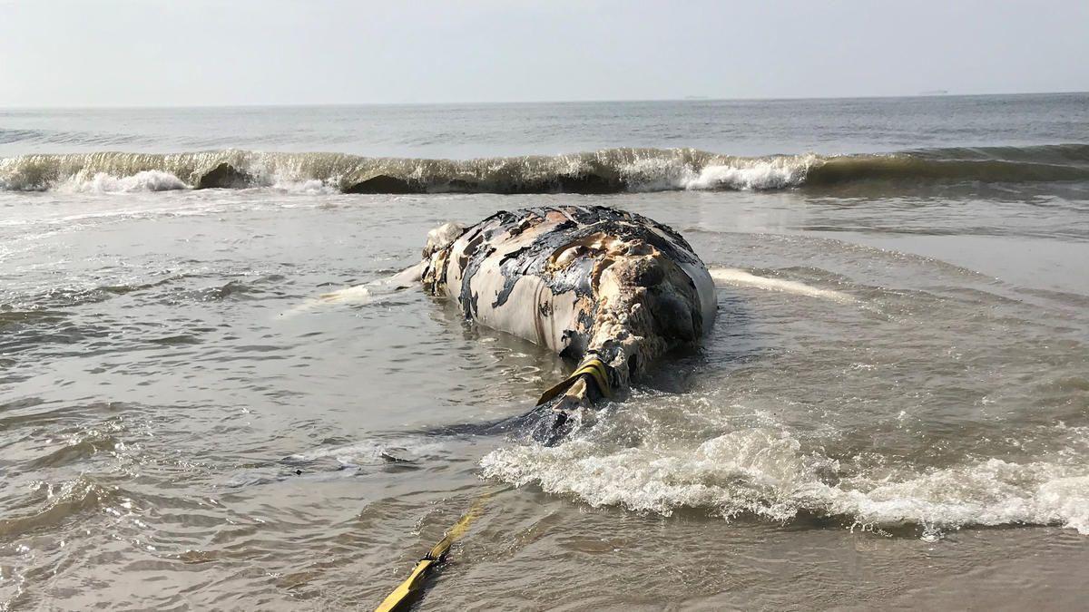 Dead%2 B Whale%2 B Queens Epide