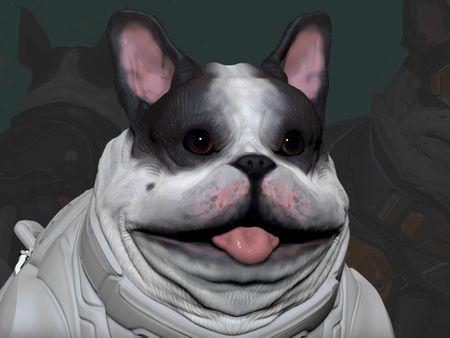 French bulldog - DR.Zarkov