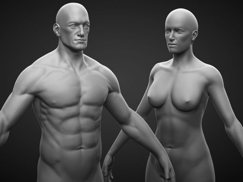 Anatomy Study- Female and Male